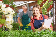 Woman checking growth of plants Stock Photo