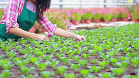 Woman checking the plants Stock Photo