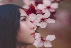 Woman Beside Cherry Blossoms royalty free stock photo