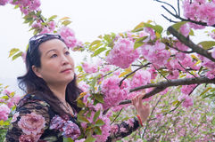 Woman and cherry blossoms Stock Image
