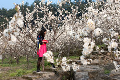 Woman and cherry flowers Stock Photos