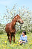 Woman and chestnut horse at the blooming field Stock Photography