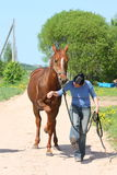 Woman and chestnut horse walking at the road Royalty Free Stock Image