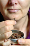 Woman chew dried clove spice. For fresh breath Stock Photography