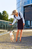 Woman with chihuahua . Stock Photo