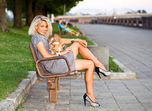 Woman with chihuahua on a bench. Stock Images