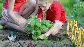 Woman and the child planting seedlings and watering them in backyard garden stock video