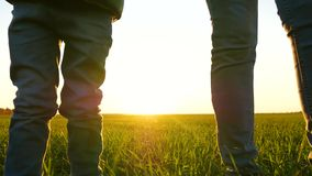 A woman and a child stand in a field on the green grass, holding each other`s hands. The rays of the sun pass through