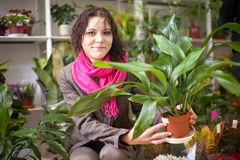 Woman chooses aspidistra Royalty Free Stock Photos