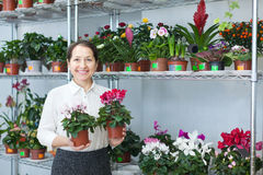 Woman chooses Cyclamen  at flower shop Stock Images