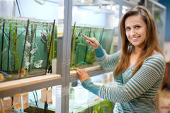 Woman chooses  fish in  tank Stock Photo