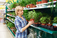 Woman chooses house plants in store Royalty Free Stock Photo