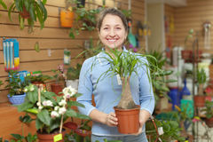 Woman chooses Nolina in pot at flower shop Royalty Free Stock Image