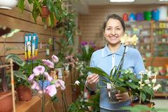 Woman chooses Phalaenopsis at flower shop Stock Photos