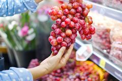 Woman choosing bunch fresh red grape to buy in supermarket.  Royalty Free Stock Photo