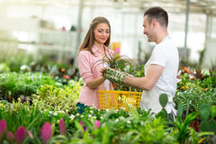 Woman choosing flowers Royalty Free Stock Photo
