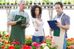 Woman choosing flowers Stock Photos