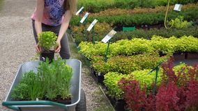 woman choosing garden plants at plant nursery