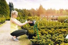 Free Woman Choosing Ornamental Conifer Tree At Outdoor Plant Nursery Royalty Free Stock Photo - 92715215