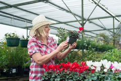 Woman choosing plants and flowers at nursery Stock Photo
