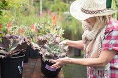 Woman choosing plants at nursery Royalty Free Stock Images