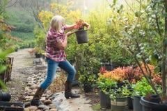 Woman choosing plants at nursery Stock Images
