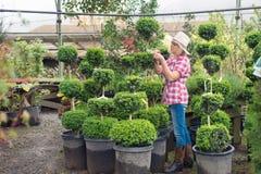 Woman choosing plants at nursery Royalty Free Stock Image