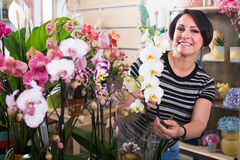 Woman choosing  potted phalaenopsis. Smiling woman buying a potted multicolored phalaenopsis flower in the floral boutique Stock Photo