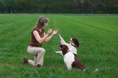 Woman clapping hands for dogs which give her a paw. A woman is clapping her hands for two dogs and the dogs give her a paw stock image
