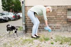 Woman Cleaning Dog Feces. Young Woman With Plastic Bag Cleaning Dog Feces Royalty Free Stock Image