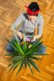 Woman cleaning flowers in the pot Stock Images