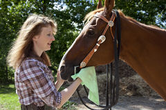 Woman cleaning horse muzzle Royalty Free Stock Photos