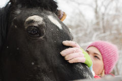 Woman cleaning the horse neb Stock Photography