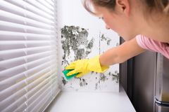 Woman Cleaning Mold From Wall. Close-up Of Woman Cleaning Mold From Wall Using Spray Bottle And Sponge stock photo