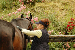 Woman cleans horse Stock Images