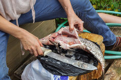 Woman cleans a huge fish. Bream on cutting board. Woman cleans river fish in unsanitary conditions Royalty Free Stock Photos