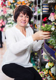 Woman client deciding on best begonia Royalty Free Stock Photography