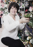 Woman client deciding on best begonia Royalty Free Stock Photos