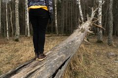 Woman climbing on a fallen tree in a forest at the beach near the Baltic Sea royalty free stock images