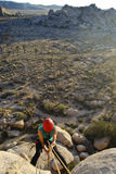 Woman Climbing Joshua Tree Stock Images