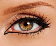 Woman close-up eye. False lash stock image