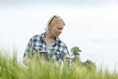 Woman Clutching a Tablet Computer Looking Down on Wheat Field. Woman clutching a tablet computer looking down on a wheat field with white sky in the background Stock Photo