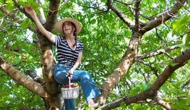 Woman collectiing cherries. Stock Photos