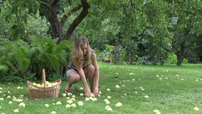 Woman collecting apples off the ground. 4K stock footage