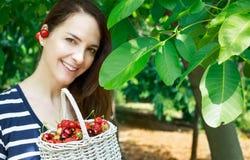 Woman collecting cherries. Stock Photos