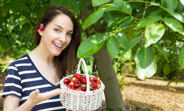 Woman collecting cherries. Royalty Free Stock Images