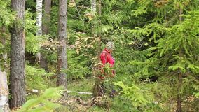 Woman collecting mushrooms in forest autumn nature stock video