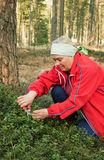 Woman collects cowberry leaves Royalty Free Stock Photography