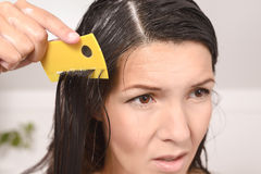 Woman combing out lice in her hair Royalty Free Stock Image