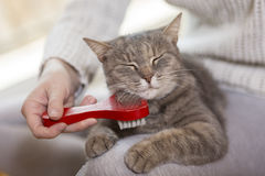 Woman combing pet cat Royalty Free Stock Photos
